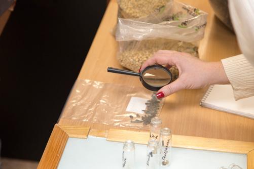Лаборанты Cargill изучают семена подсолнечника с отклонениями под увеличительной лупой